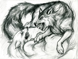 two_wolves_sketch_by_caroline_leideritz