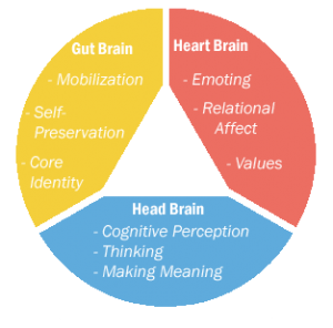 prime functions of the 3 brains