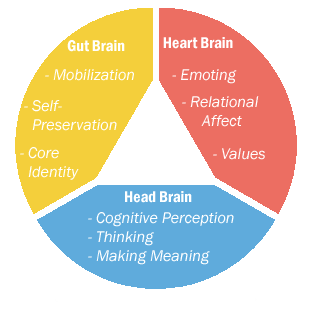 prime functions of the 3 brains. Is mBraining available in Shanghai China